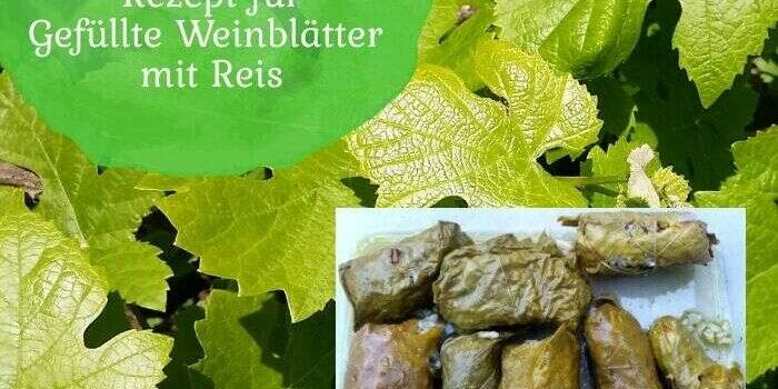 Aus der Natur in die Küche: Rezept für gefüllte Weinblätter mit Reis